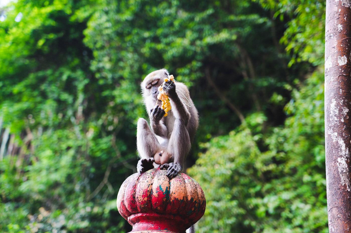 Travel-Malaysia-Kuala-Lumpur-81